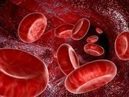 Hematology & Blood Transfusion